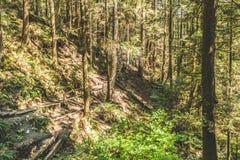 在猎物岩石附近的贝登・鲍威尔足迹在北温哥华区, BC, Cana 免版税库存图片