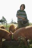 在猪圈的男孩哺养的猪 库存图片