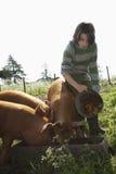 在猪圈的男孩哺养的猪 免版税库存图片