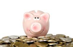 在猪微笑的突出附近的货币 库存照片