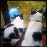 在猫世界的一个雨天 库存照片