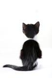 在猫之后的背景一点白色 库存照片