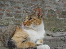 在猫查找之后 免版税库存照片