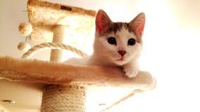 在猫树的逗人喜爱的小猫 免版税库存照片