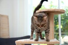 在猫树的逗人喜爱的猫咪 免版税库存照片