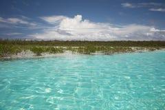 在猫海岛,巴哈马的海滩和美洲红树海岸 免版税库存图片