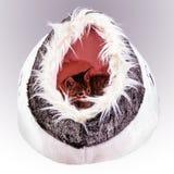 在猫的床里面 免版税库存照片