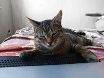 在猫的灰色天 库存图片