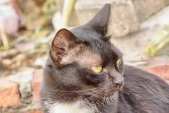 在猫的眼睛干燥鼻粘液 图库摄影