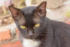 在猫的眼睛干燥鼻粘液 库存照片