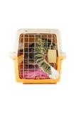 在猫载体箱子里面的猫 免版税库存图片