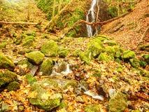 在玄武岩岩石的秋天瀑布 走路的小河和许多五颜六色的叶子在银行 免版税图库摄影