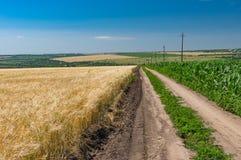 在玉米和麦子农业领域中的土路 库存照片