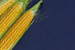 在玉米棒的新鲜的玉米反对黑暗的背景,特写镜头,拷贝空间 库存照片