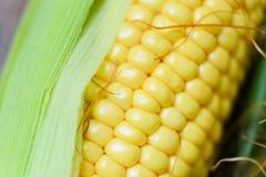 在玉米棒的新鲜的玉米和在土气木桌背景关闭的甜玉米耳朵 免版税库存图片