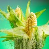 在玉米棒的新鲜的玉米在土气木桌上, 库存照片