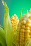 在玉米棒的新鲜的玉米在土气木桌上, 图库摄影
