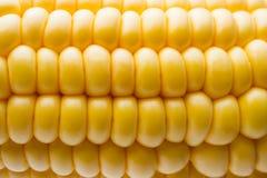 在玉米棒的新鲜的玉米在土气木桌上, 免版税库存图片