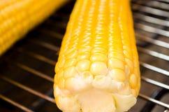 在玉米棒的新鲜的玉米在格栅,特写镜头 图库摄影