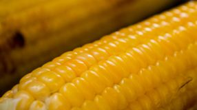 在玉米棒的新鲜的玉米在格栅,特写镜头 库存图片