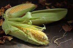 在玉米棒的新鲜的甜玉米 库存照片