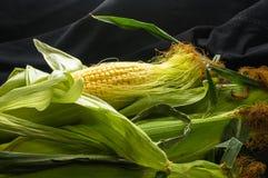 在玉米棒的玉米 免版税图库摄影