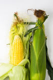在玉米棒的玉米 免版税库存照片