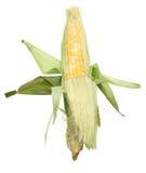 在玉米棒的玉米 库存照片
