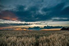 在玉米田上的暴风云在晚上 库存图片