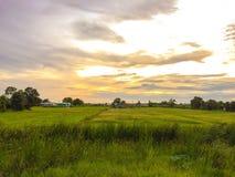 在玉米田的日落 库存照片