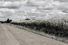 在玉米田边缘的教会 库存图片