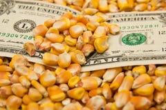 在玉米的美元 免版税库存照片