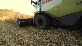 在玉米的领域的联合收割机 影视素材
