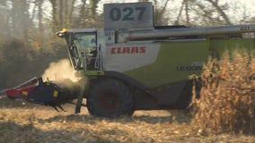 在玉米的领域的联合收割机 股票录像