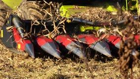 在玉米的领域的联合收割机 股票视频