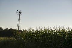 在玉米的领域的高古老风车 免版税库存照片