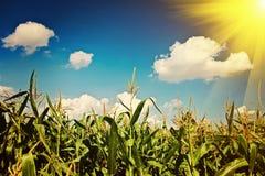 在玉米instagram窗框的太阳 库存照片