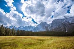 在玉龙雪山的云杉的高原 免版税库存照片