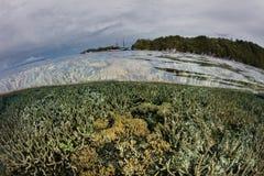 在王侯Ampat,印度尼西亚的健康珊瑚 图库摄影