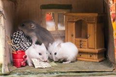 在玩具拖拉机的滑稽的小的仓鼠乘驾 免版税库存照片