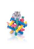 在玩具白色背景的矮小的仓鼠 免版税库存图片