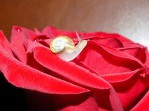 在玫瑰的蜗牛 免版税库存图片
