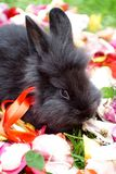 在玫瑰花瓣的兔宝宝 图库摄影