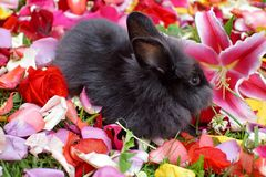 在玫瑰花瓣的兔宝宝 免版税图库摄影