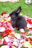 在玫瑰花瓣的兔宝宝 免版税库存图片