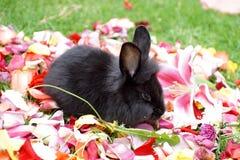 在玫瑰花瓣的兔宝宝 免版税库存照片
