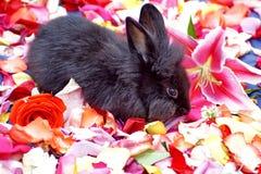 在玫瑰花瓣的兔宝宝 库存照片
