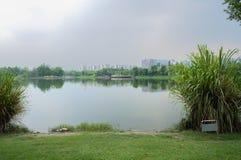 在现代城市多云夏天中午的象草的湖边在雨前 免版税库存图片