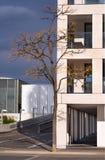 在现代建筑学的唯一树 免版税库存图片