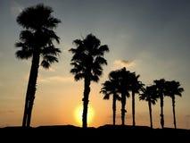 在现出轮廓的棕榈树后的奥兰多佛罗里达金黄日出 库存图片